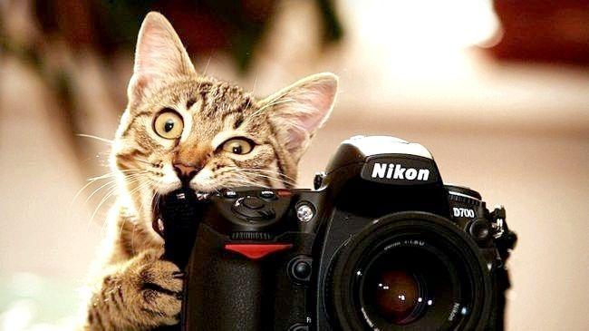 що потрібно для професії фотографа
