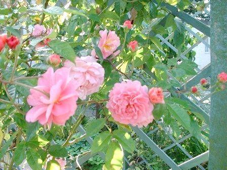 Проста опора для витких рослин