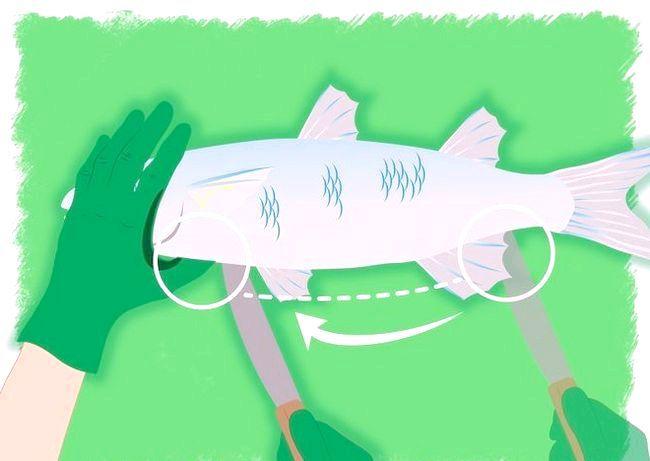 Обробка і розбирання риби
