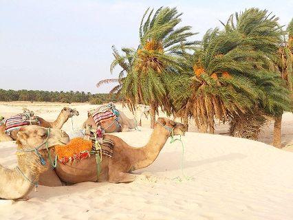 пустеля цукру в Тунісі