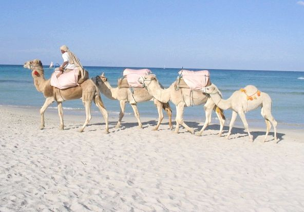 тунис пустеля цукру екскурсія