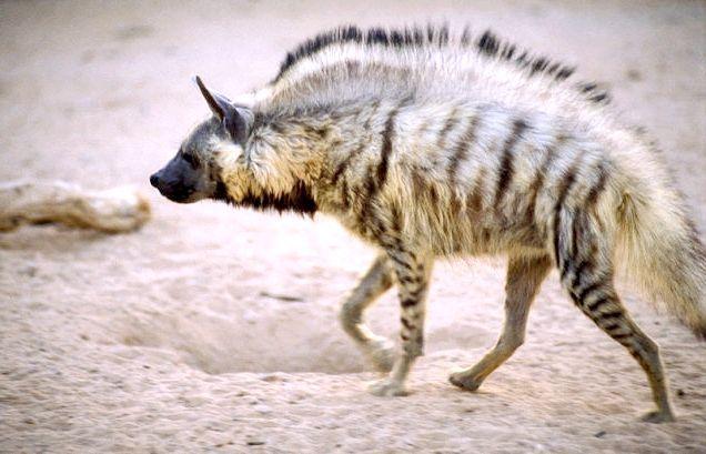найшвидше тварина в світі