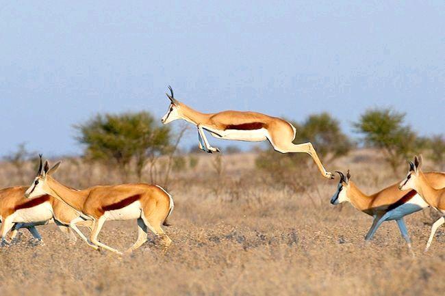 найшвидші тварини на землі