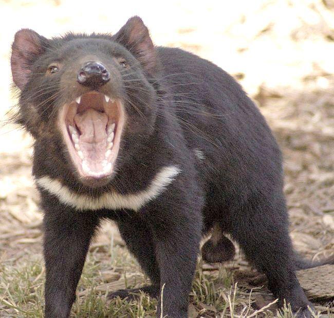 найстрашніші тварини в світі топ 100