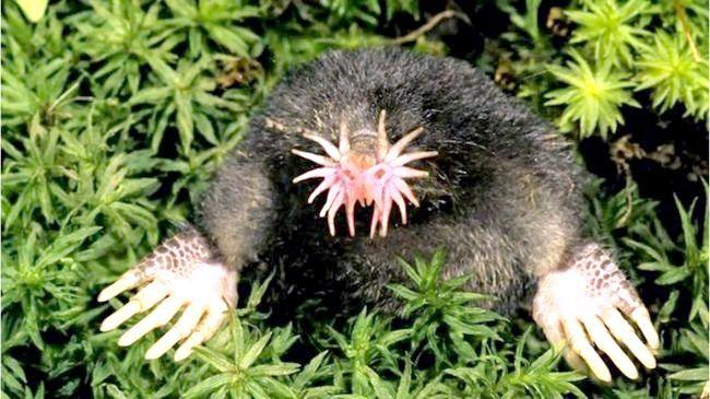 найстрашніші тварини в світі топ 10