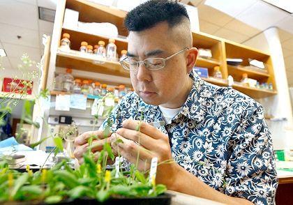 Селекція рослин: інбрідінг и гібрідізація