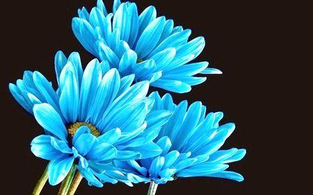 сині квіти назви