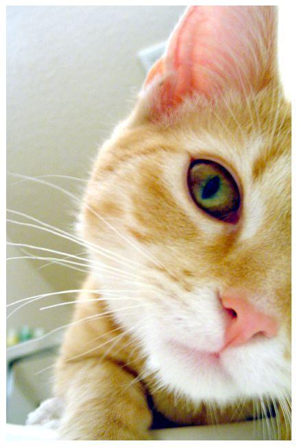сльозяться очі у кішки