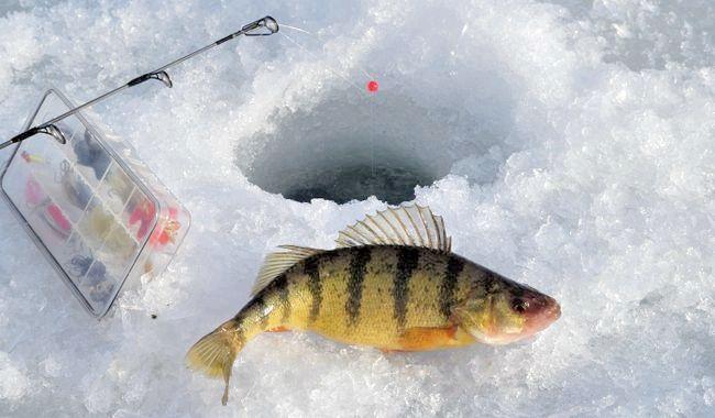 зимова риболовля на окуня снасті