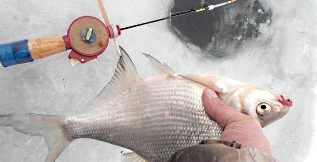зимова риболовля снасті на ляща