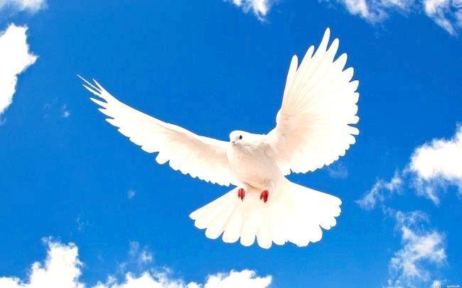сонник білі голуби