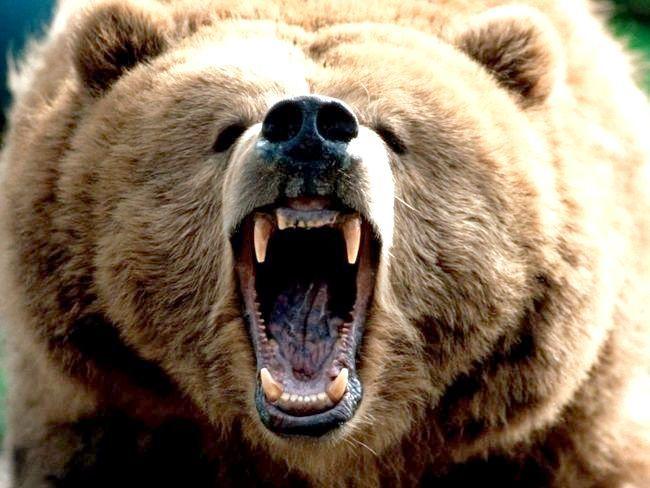 до чого сняться ведмеді