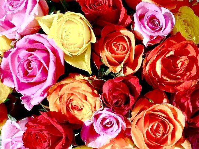 Сонник: до чого сняться троянди