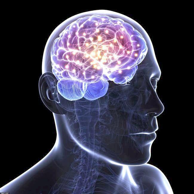 будова спинного мозку людини
