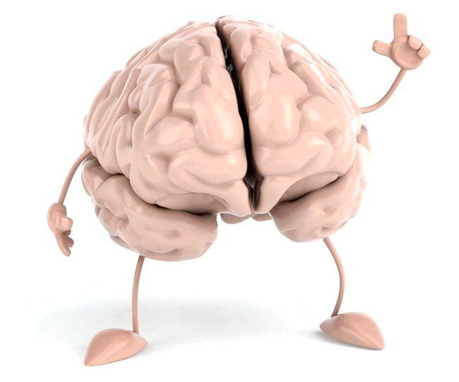 будову кори головного мозку