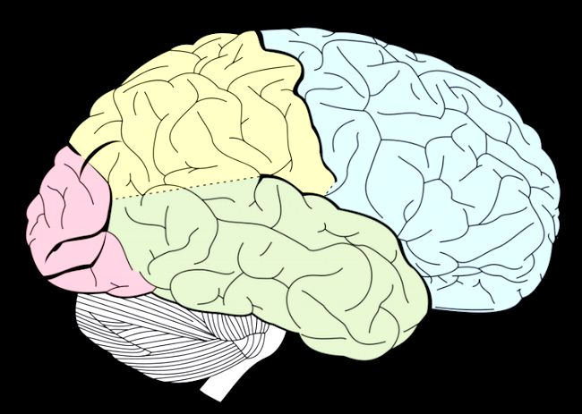 будова мозку