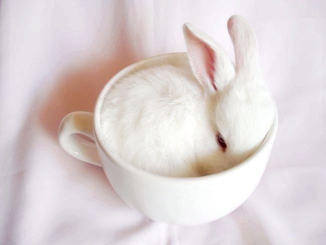 До чого сняться кролики
