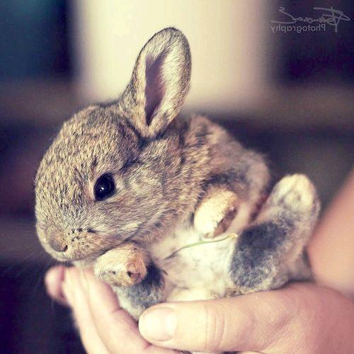 Кролик уві сні