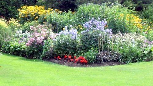 трав'янисті рослини біля будинку
