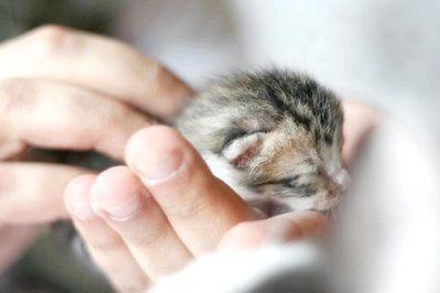 сльозяться очі у кішки лікування
