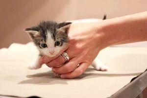 у кішки сльозяться очі причини