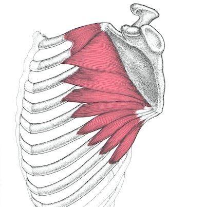 як накачати передню зубчасту м'яз