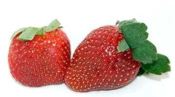 вікторія ягода