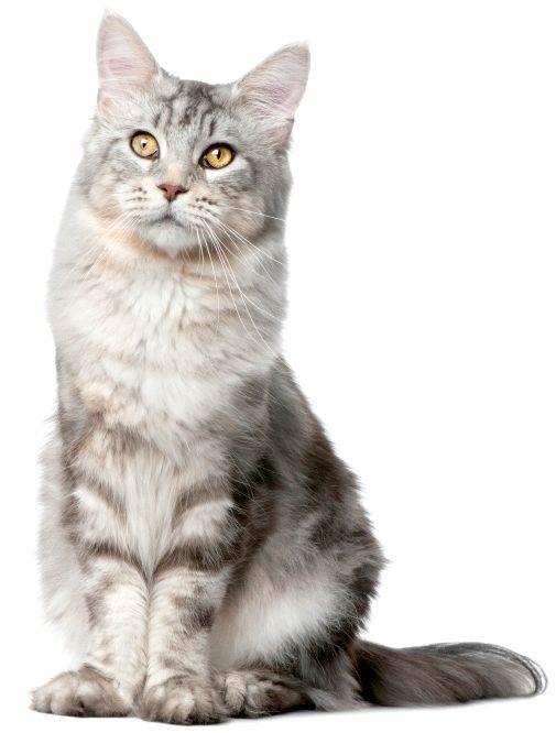 Вибираємо імена для кішок-дівчаток