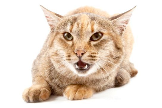 популярні імена для кішок