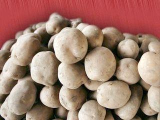 Вирощування картоплі корістується успіхом з давніх часів