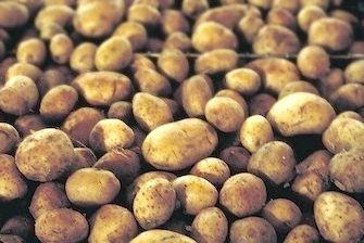 агротехніка вирощування картоплі