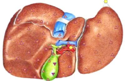 жовч в жовчному міхурі симптоми