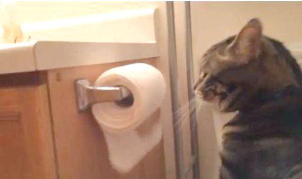 лікування запору у кішок