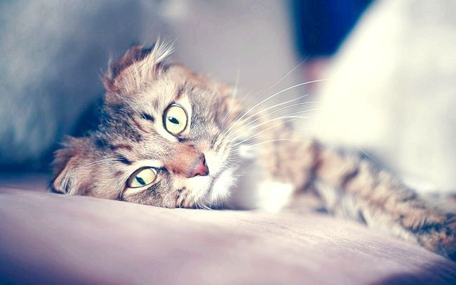 як лікувати запор у кішки