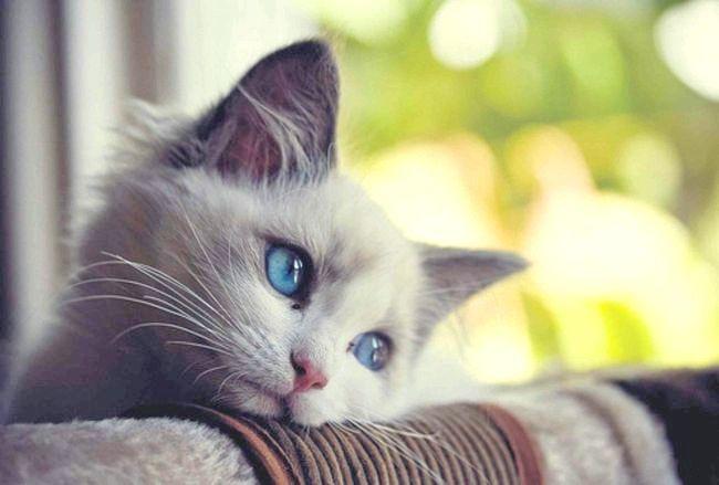 запор у кішки симптоми