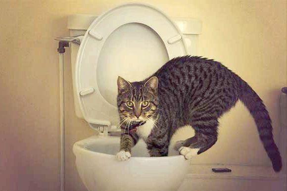 у кішки запор чим допомогти