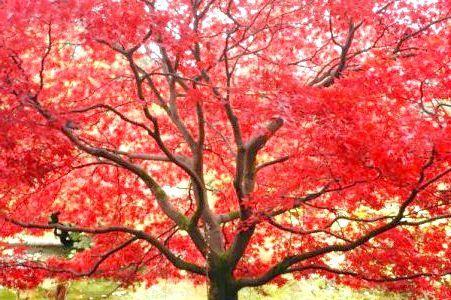тверді породи дерева