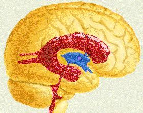 шлуночки головного мозку