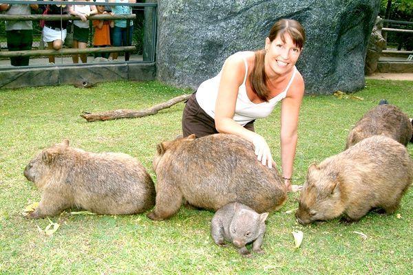 тварини австралії