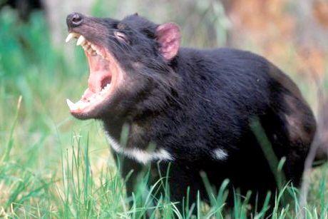 небезпечні тварини австралії