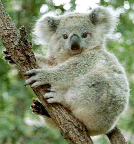 найнебезпечніші тварини австралії